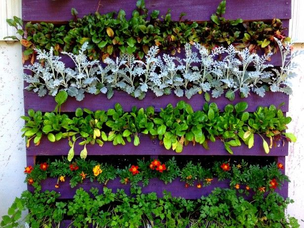 HGTV Gardens shows the many uses for upcycled wooden pallets in the garden.