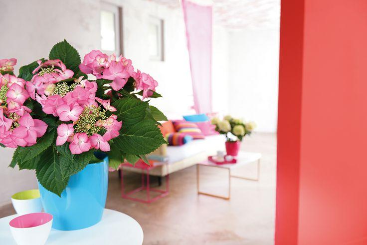Les couleurs illuminent votre int rieur truffaut for Porte plantes dinterieur truffaut