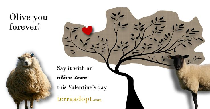 """Olive you forever!"" Say it with an olive tree this #ValentinesDay. We'll send an adoption e-certificate in time for the big day #TerraAdopt #adoptanolivetree"