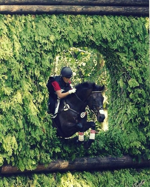 A striking cross country jump. What a brave and trusting horse to jump through this hedge blindly for his rider. Indeed horses do amazing things for us!