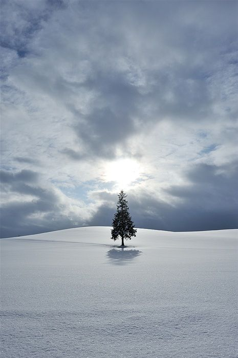 Snow Hill  -  Yukio Miki: Snow Hill, Lonely Trees, Learning Photography, Winter Trees, Hard Lights, Winter Wonderland, Lonely Pine, Christmas Trees
