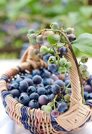 "seasonalwonderment: "" 4seasons-blog: "" blueberries (via Pinterest) "" """