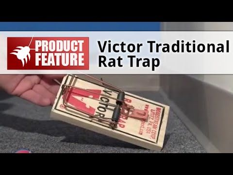 the victor rat trap is quick and effective when baited and set properly the trap will kill rats. Black Bedroom Furniture Sets. Home Design Ideas