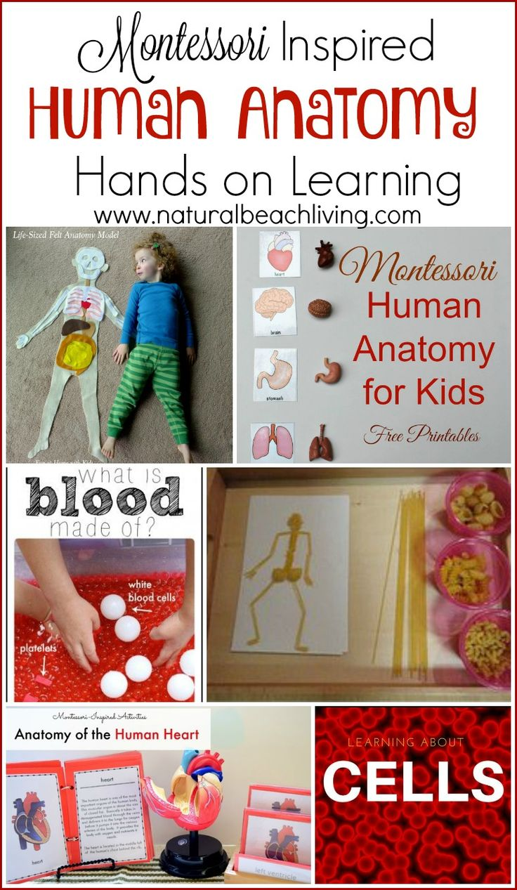 258 best Human Anatomy / Human Body Unit images on Pinterest | Human ...