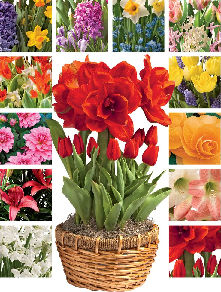 Monthly Flower Delivery: 12 Months of Blooms | Gardener's Supply