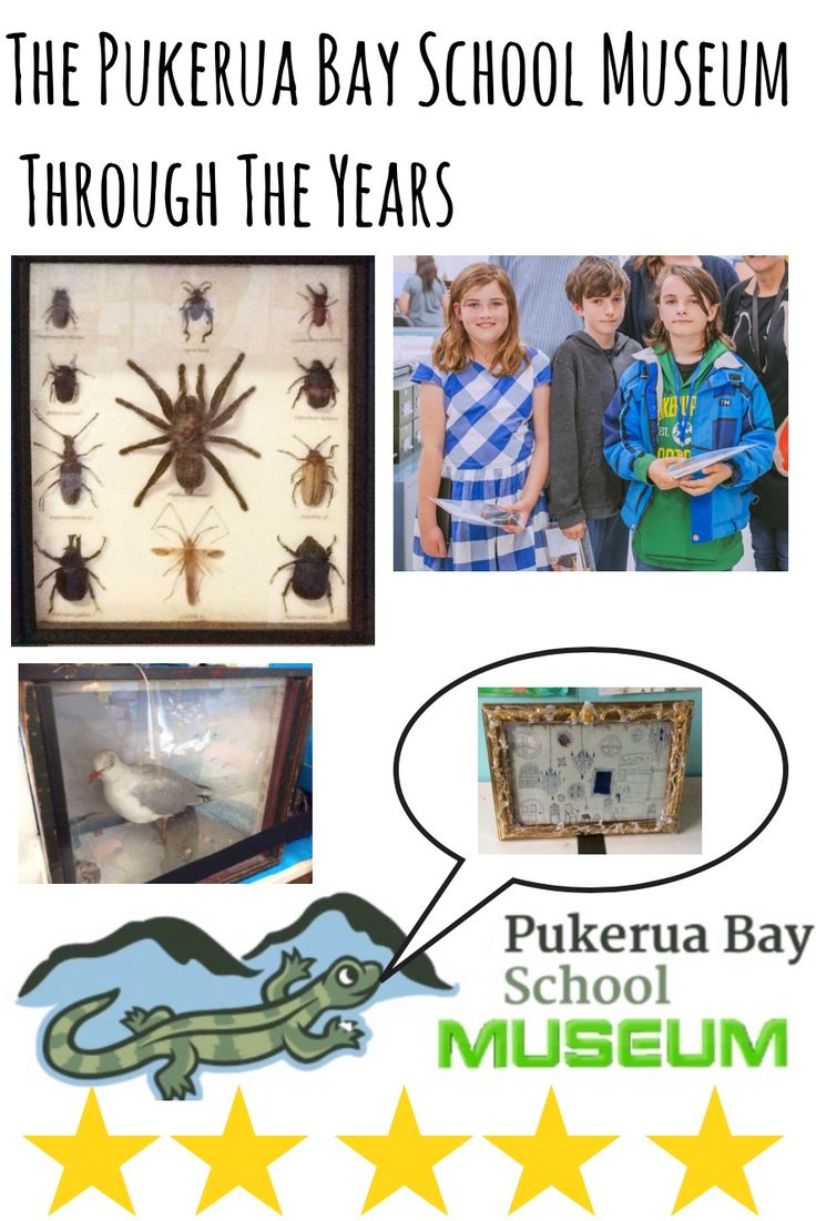 The Pukerua Bay School Museum Through The Years book by the Pukerua Bay School Museum team.