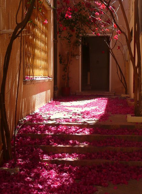 The petals of the Bougainvillea trees blown into a corner in Nafplio, Greece (by Eye2Eye2You2).