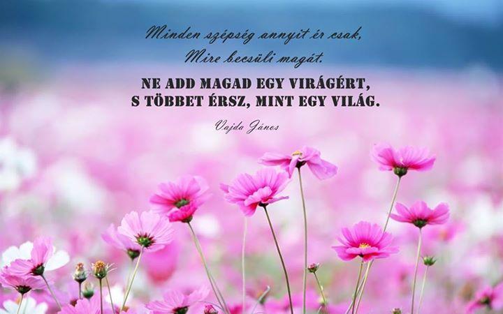 Petőfi Sándor verse a szépségről. A kép forrása: Pozitív Nap # Facebook