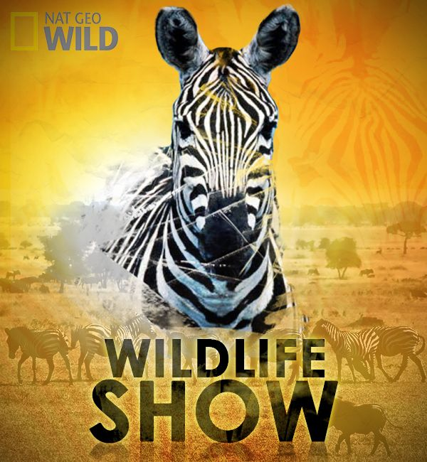 Created a sample Tv poster for a wildlife show.