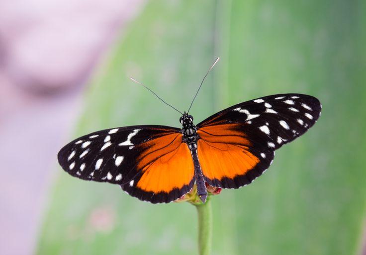 Butterfly. Fuji X-T1