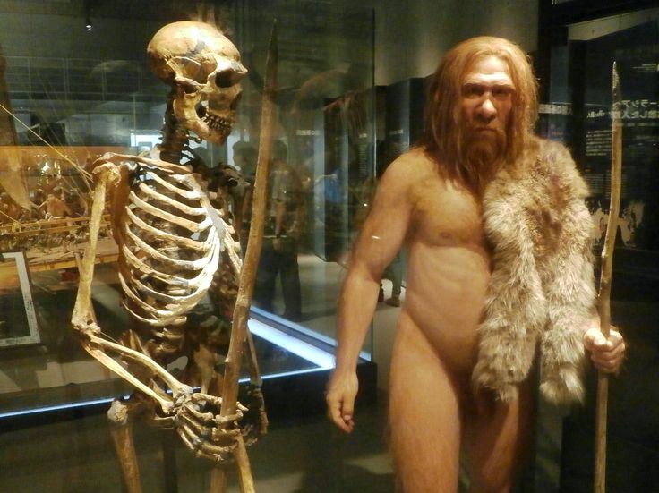 6万年前に人類が手に入れた脅異の能力とは? ネアンデルタール人との決定的な「遺伝的違い」が明らかに | JBpress(日本ビジネスプレス)