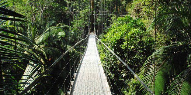 Nicht mal der Nebel ist echt: So führt RTL alle Dschungel-Fans vor - Video