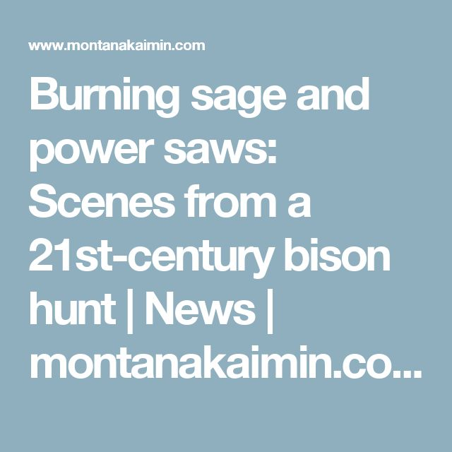 Burning sage and power saws: Scenes from a 21st-century bison hunt | News | montanakaimin.com