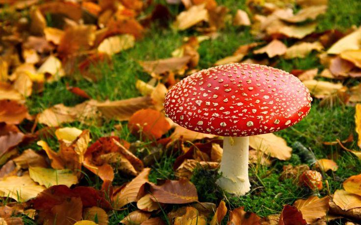 #autumn #autumncolors #paddenstoel
