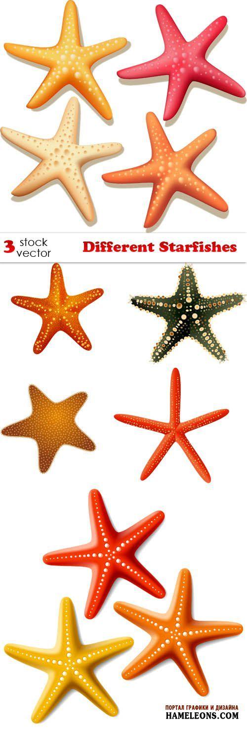Морские звезды - векторный клипарт | Starfishes