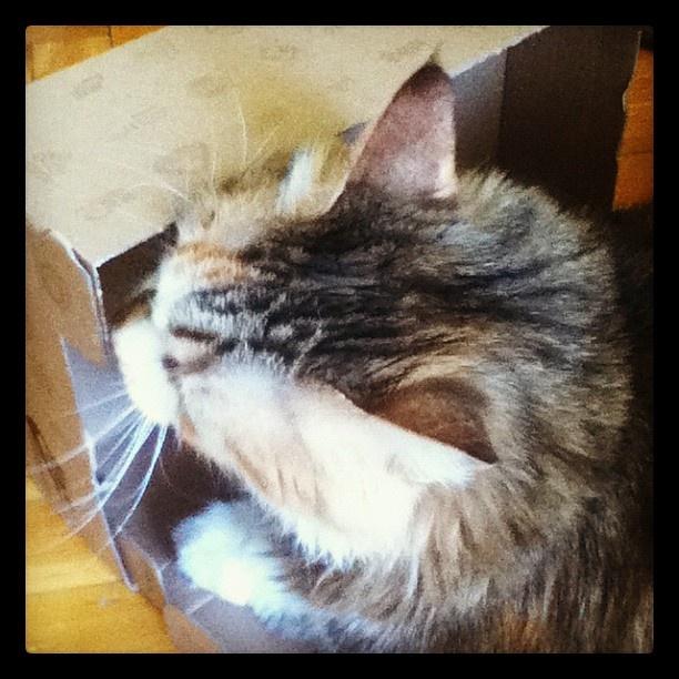 25 TL'lik hediye çeki benim olmadan bırakmam diyen minik kedi, kutusuna sımsıkı sarılmış! Siz de en yakın dostunuzun bir kutu içinde çekilmiş fotoğrafını mailto: sosyalmedya@altincicadde.com'a gönderin, 25 TL değerinde hediye çekinin sahibi olma şansını yakalayın!