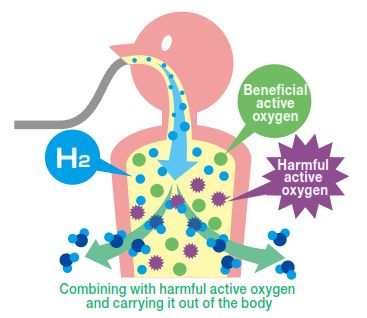 Inhaling H2 removes harmful radical from human body. After middle age body declines the physical strength and immunity so as a result harmful active oxygen buildsup in the body affects the cell. We need strong powerful antioxidants to combat and neutralize these harmful active oxygen (Free radicals) so one such similar antioxidant is H2. Though
