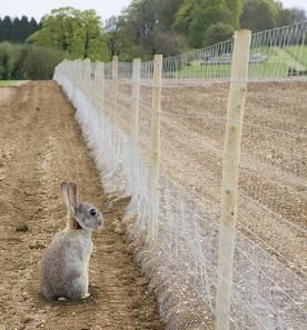 rabbit-proof garden fencing ideas I should really do something like this. Ive already lost 2 tomato plants, a squash and a pepper plant.