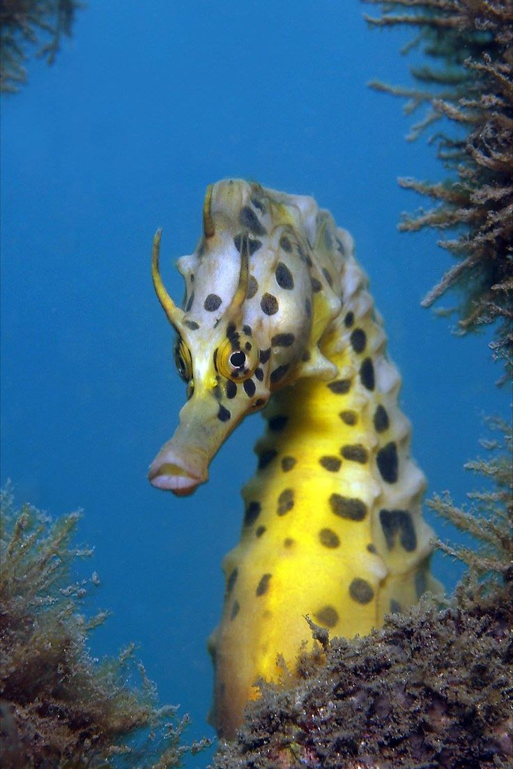 Seahorse by jayne jenkins for Is a seahorse a fish