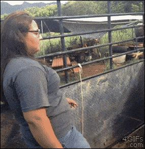 These goats refusing to accept this woman's dance: