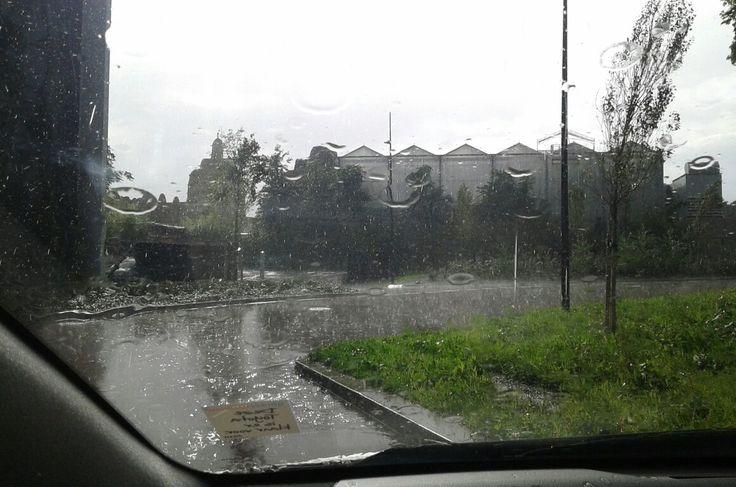 //☆ 9-9-'17 / rain / wildlands