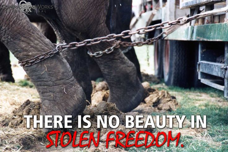 CompassionWorks Intl @CWIntl     RT if you find it hard to believe that THIS still happens today.  #BoycottTheCircus