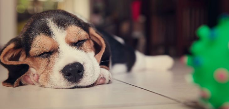 Best 9 Dog Breeds For Families With Small Kids
