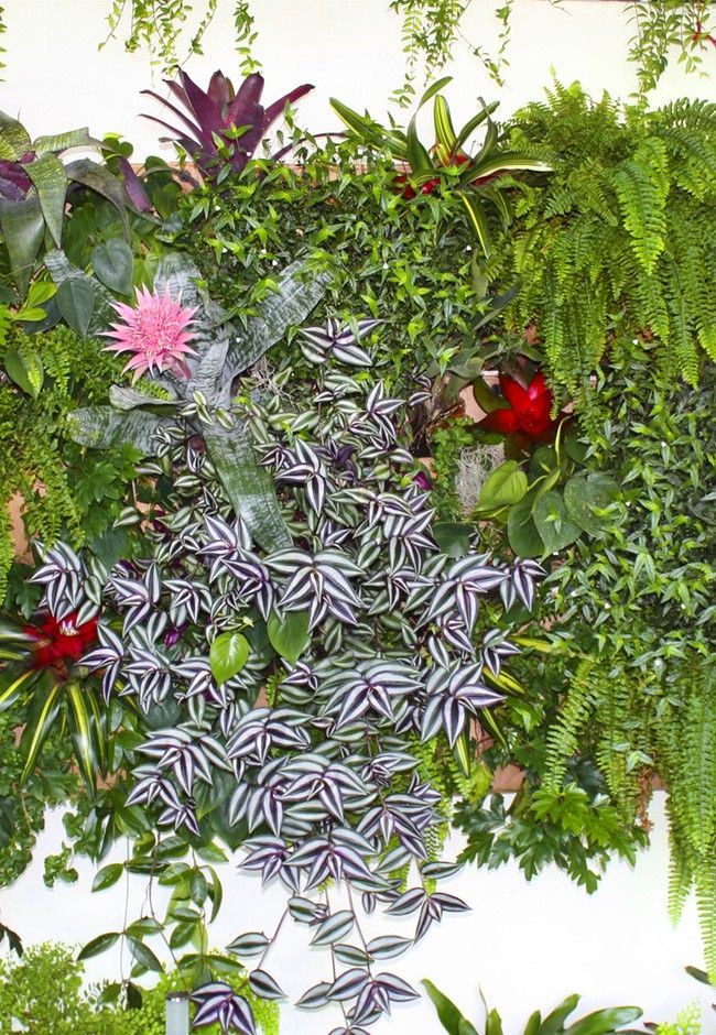 How to build a living wall - step by step   Good Magazine