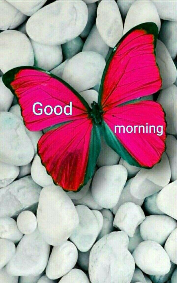 222 best GOOD MORNING DARLING images on Pinterest | Good