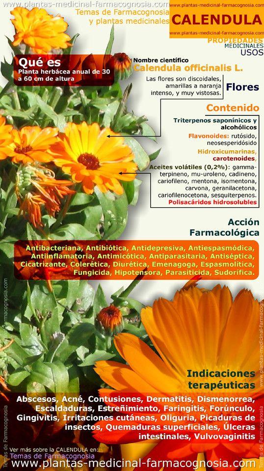 Propiedades y beneficios de la calendula. Infografía. Resumen de las características generales de la planta de Calendula. Propiedades, beneficios y usos medicinales más comunes de la Calendula. http://www.plantas-medicinal-farmacognosia.com/productos-naturales/calendula/
