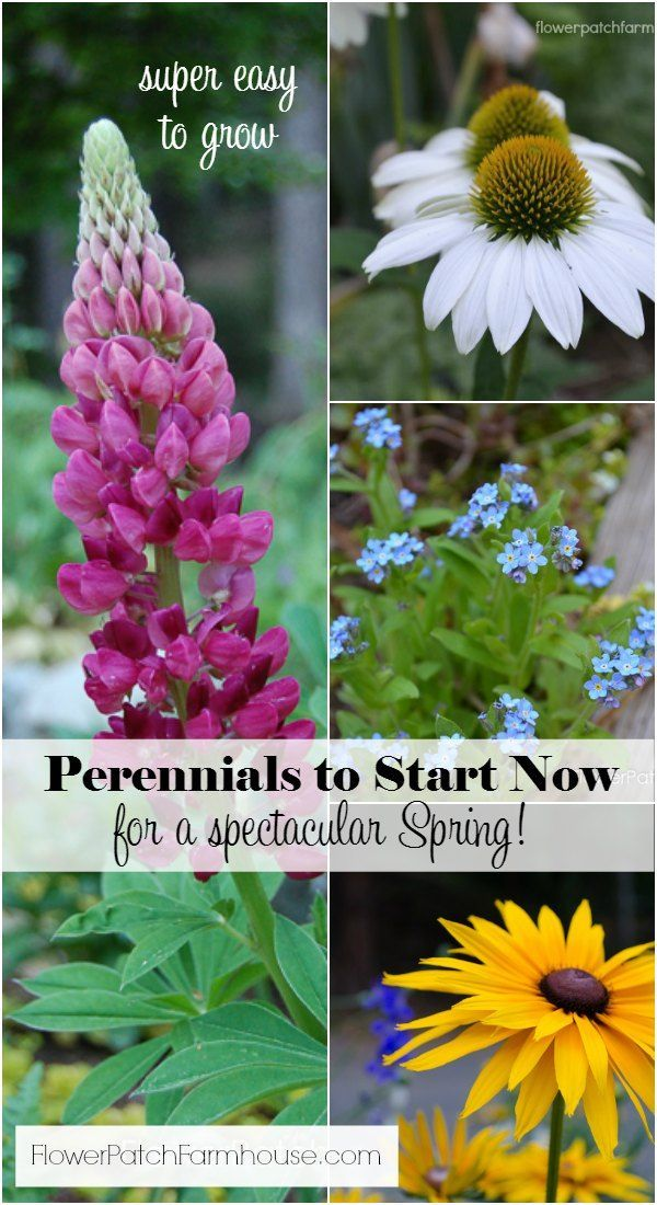 Fabulous Perennials that are easy to start from seed. Best planted in Fall for early Spring blooms. Get started on your flower garden NOW! http://FlowerPatchFarmhouse.com