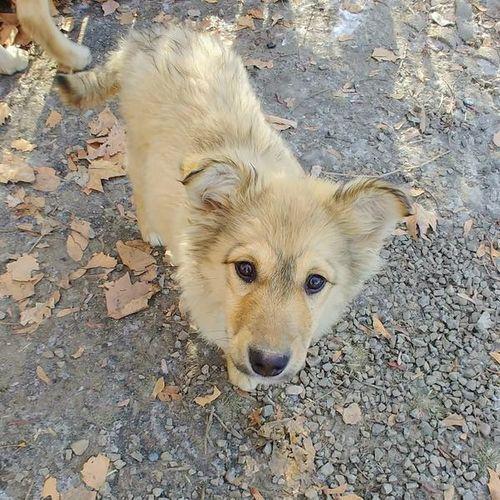 Puppies Ksl Com Animals Dogs Puppies Animals