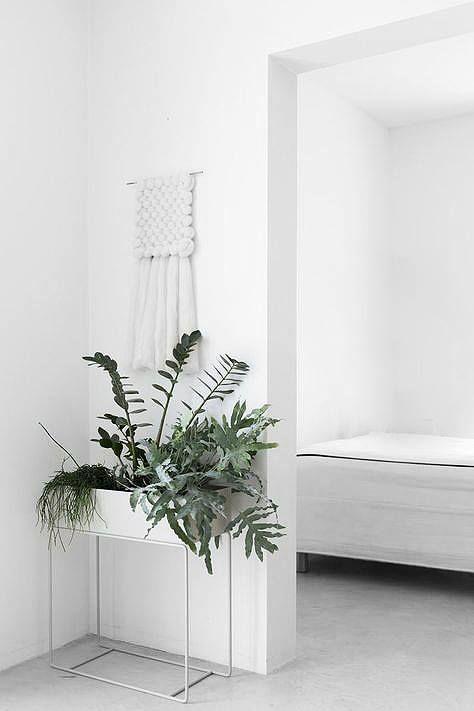 308 besten wohnen mit zimmerpflanzen urban jungle bilder for Stylische zimmerpflanzen