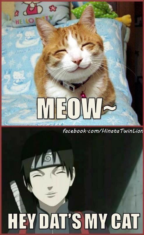 it's sai's cat
