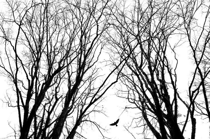 life's by Fajar Marantika on 500px
