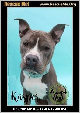 ― New York Staffordshire Bull Terrier Rescue ― ADOPTIONS ―RescueMe.Org