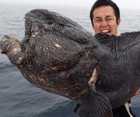 De NEIMAGINAT. Acest pescar a prins o creatură de GROAZĂ care seamană cu un MONSTRU EXTRATERESTRU   GALERIE FOTO