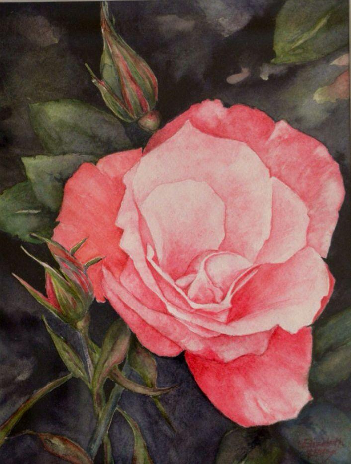 Rose in Watercoluur by Elizabeth Little
