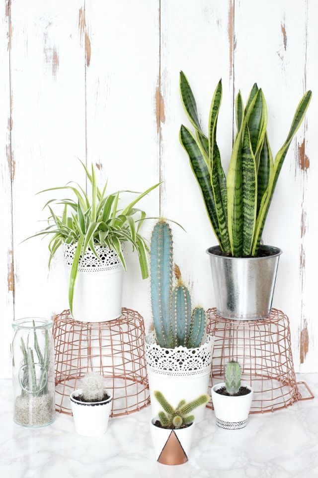 Ladylike Len : 5 HOUSE PLANTS THAT EVEN YOU CANT KILL.