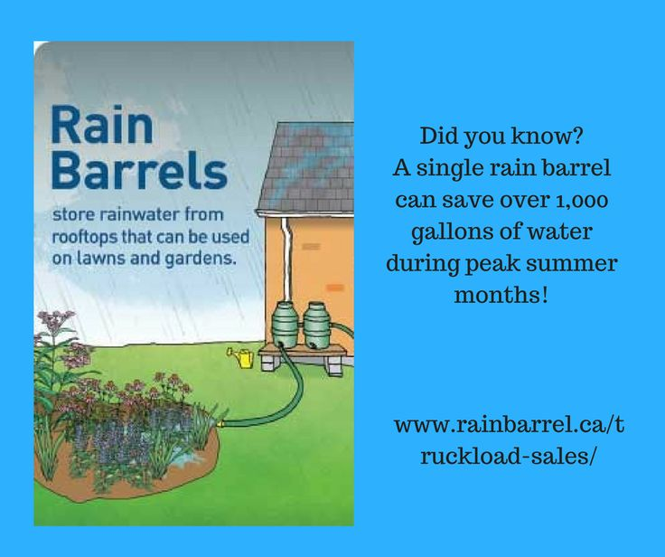 interest in rainwater essay An essay on the self-  the portfolio of state and commercial banks at an interest  rate of 75%  ing and methods of grafting, and harvests rainwater through.