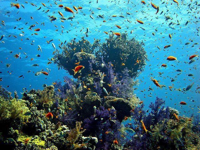 The Red Sea Coast, Egypt