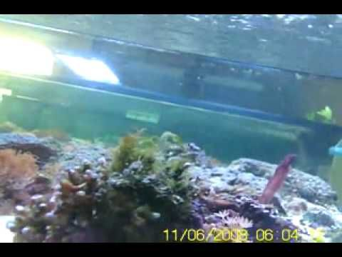 spy cam at the CORAL REEF store