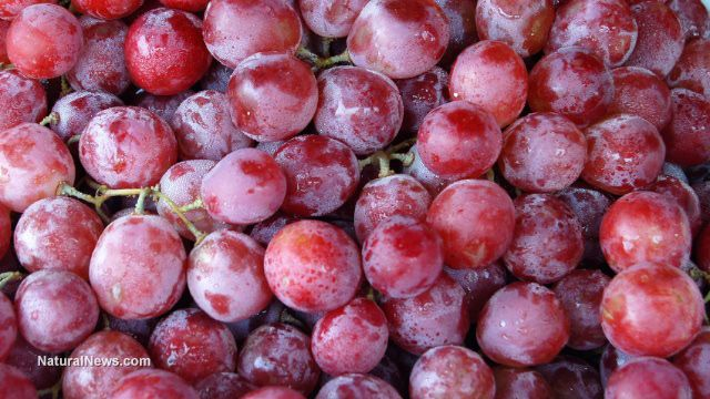 Grape seed extract more effective than chemotherapy in advanced stages of cancer.