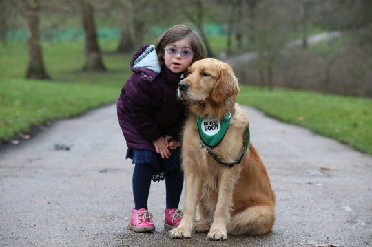 Our Hearts Melt For These Amazing Pooches Up For A Hero Award At