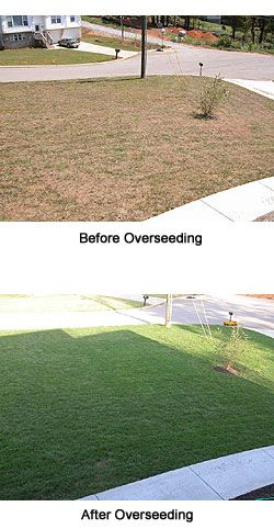 Grow a Green, Lush Lawn - Part 2.  Patching, overseeding, or starting a new lawn.  weekendgardener.net
