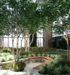 St. Joseph Mercy Hospital North Tower Meditation Garden-Ann Arbor, MI Birch Tree