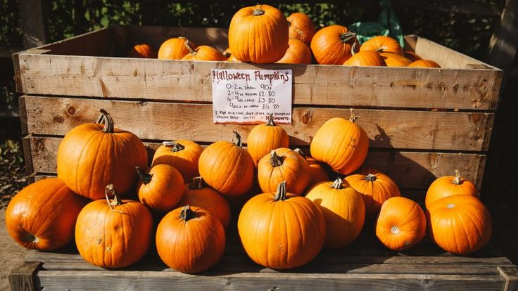 Zoella | Pumpkin Picking  I love this and it really gets me excited for when I go back to England :)