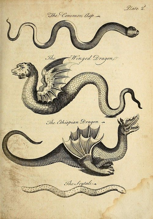 weedy sea dragon essay Weedy sea dragon essay - mbpatilcom.