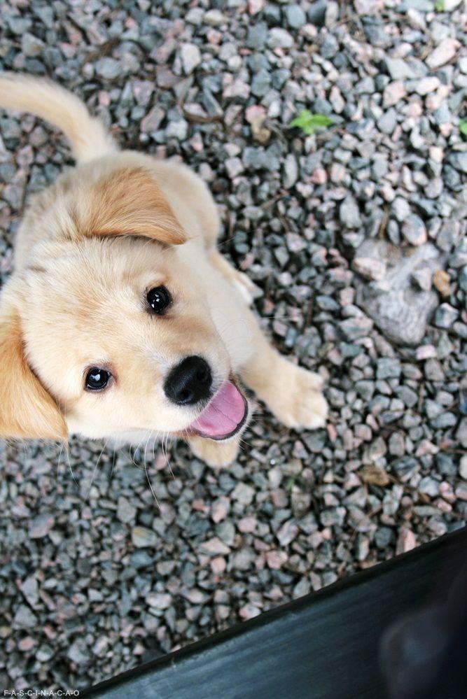 Le chien le plus heureux du monde !