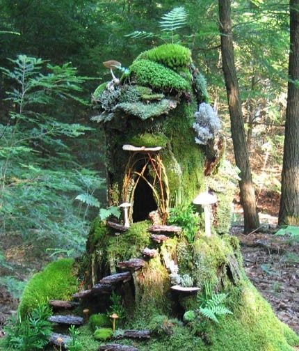 Fairy garden!!! garden what a cool house...now to find a hollow log bit.Old Trees, Gnomes Home, Fairies Home, Fairy Houses, Fairies Gardens, Fairies House, Trees House, Moss Gardens, Trees Stumps